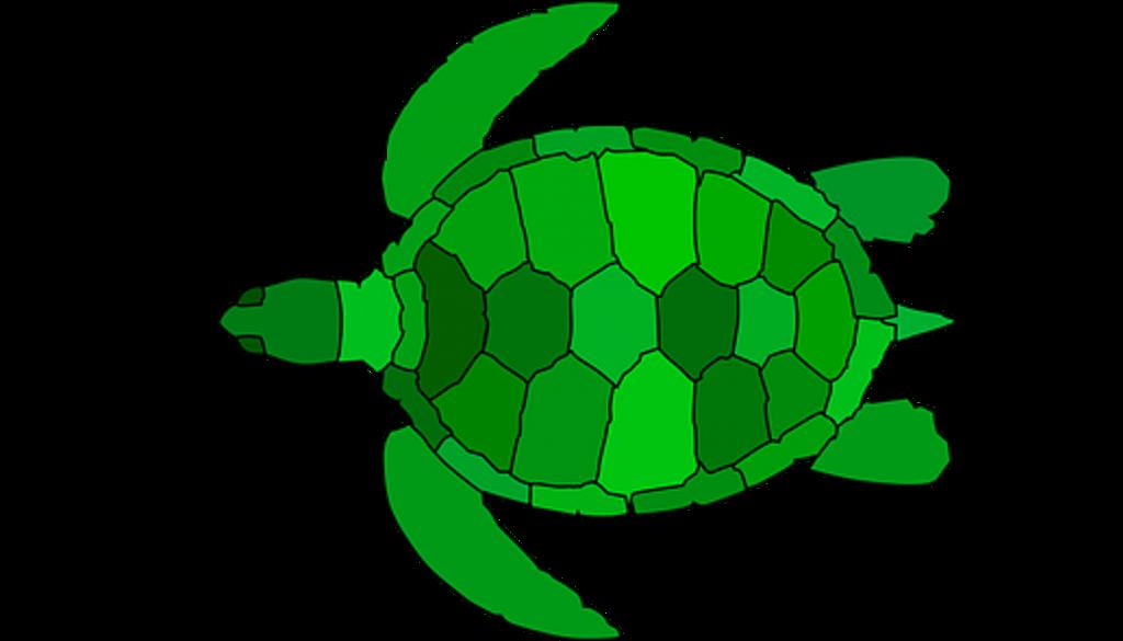 FRITZ - Turtle Diagramm